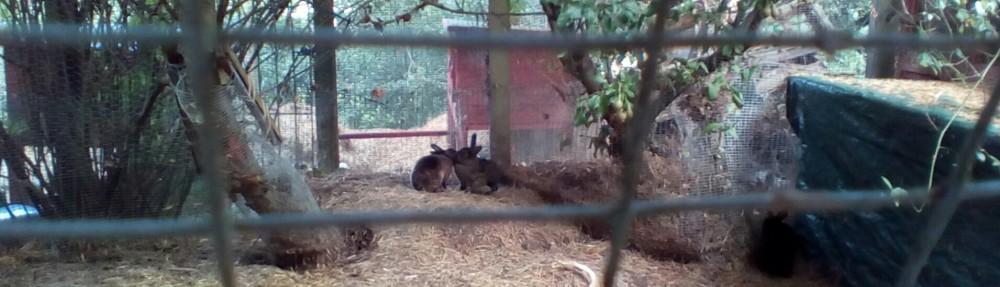 Bambi R4/14