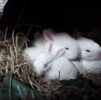 Red Currant's Litter at Two Weeks Old