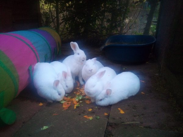 Then go and feed the peelings to your local rabbits. They will be very appreciative.